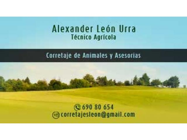 Compro Angus y Hereford - 1