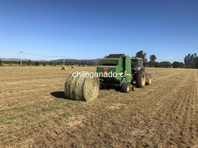 Fardos  redondos de alfalfa primer corte $40.000 c/u - 1