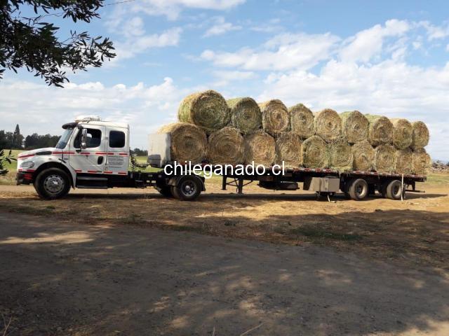 Fardos  redondos de alfalfa primer corte $40.000 c/u - 4