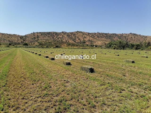 fardos de alfalfa - 3