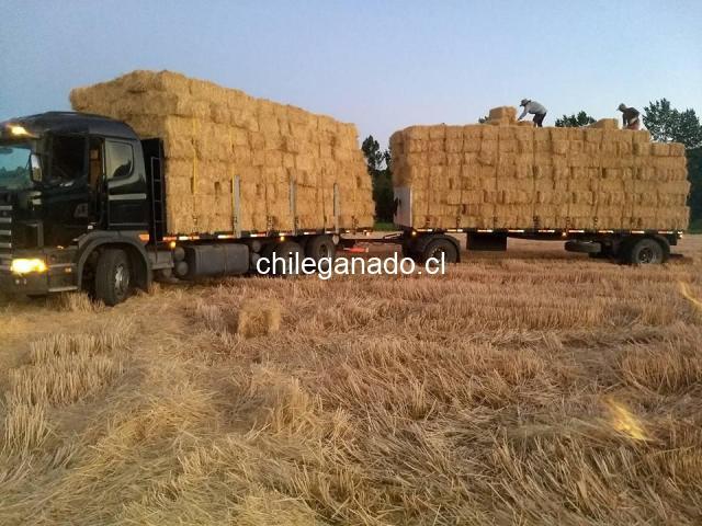 Fardos de paja de trigo - 2