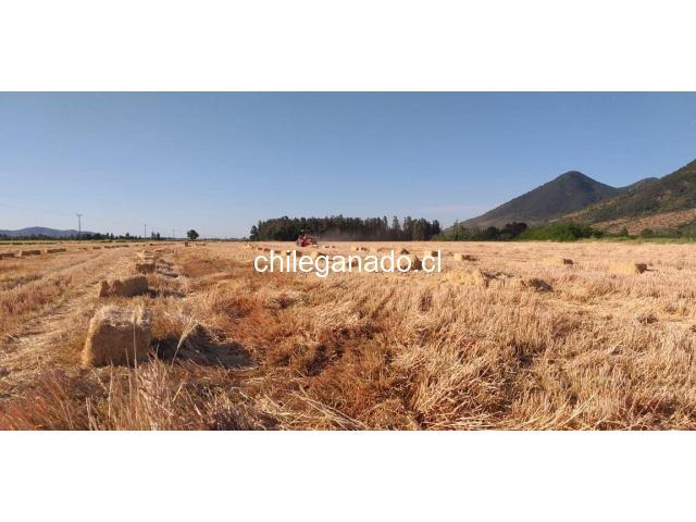 Fardos de paja de trigo - 5