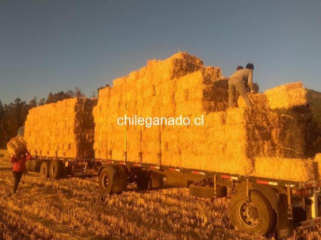Fardos de paja de trigo - 6