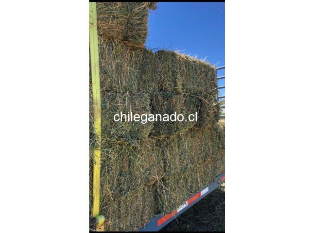 Fardos de Alfalfa 4° corte de temporada. San Vicente de Tagua Tagua - 1