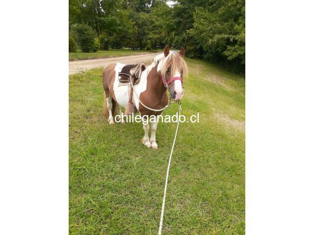 se vende pony - 3