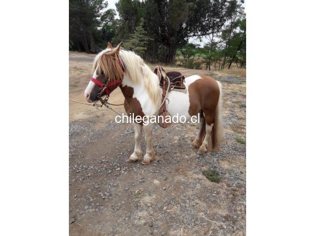 se vende pony - 4