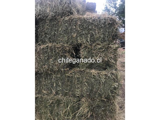 Fardos de alfalfa - 2
