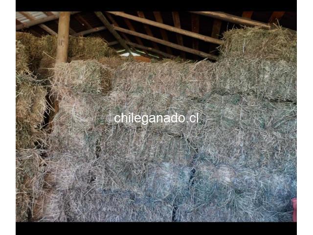 Fardos de Alfalfa Tercer Corte - 2